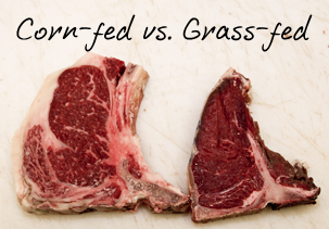 corn-fed-vs-grass-fed-beef-steak