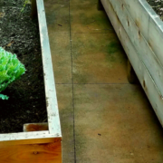 No Land to Plant- Perfect Back Porch Edible Landscape