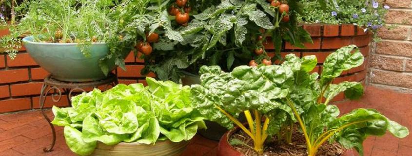 No-land-to-plant-perfect-back-porch-ediblelandscape