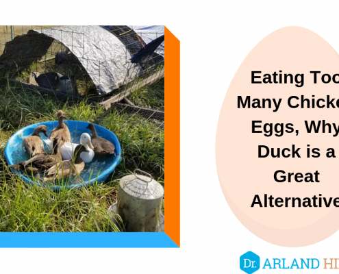 Eating Too Many Chicken Eggs, Why Duck is a Great Alternative