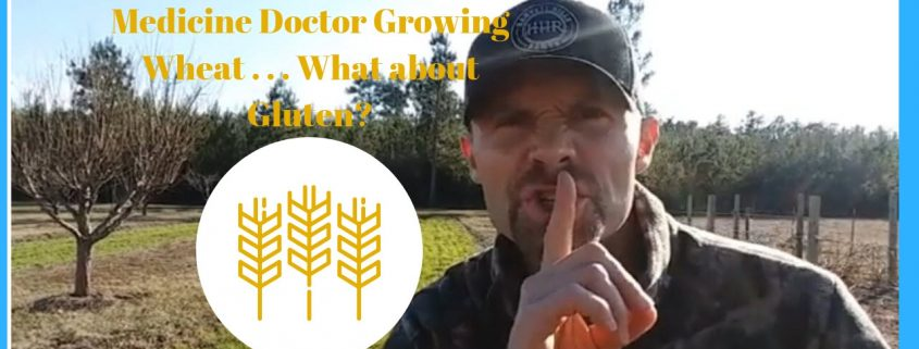 Why is a Functional Medicine Doctor Growing Wheat . . . What about Gluten?